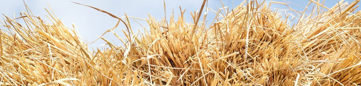 Is the Green Building Component of the Future… Rice Straw?